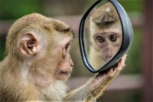 monkey-3512996_1280 pixabay 20190515
